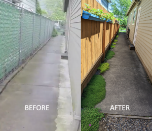 before and after garden in the side yard