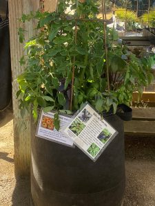 cloth-lined container for tomatoes