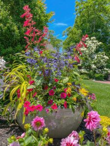 A pot filled with pink and blue flowers